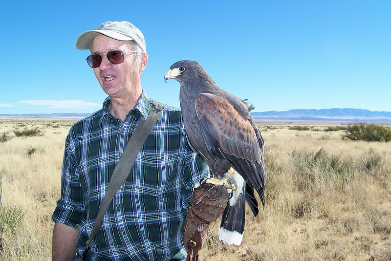 The Harris's Hawks were free to roam around and scout out the area for prey, but returned quickly when Matt whistled for them, rewarding them with a food treat when they landed on his glove.