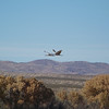 Sandhill Cranes flying in - Bosque del Apache