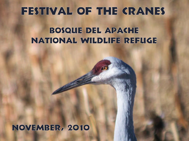 "Patti visited New Mexico in November to attend the ""Festival of the Cranes"", based in Bosque del Apache National Wildlife Refuge.  November 16 - 21, 2010"