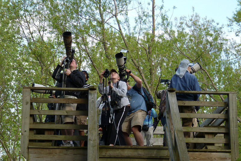 This platform was consistently loaded up with thousands of dollars worth of camera equipment.  Lots of professionals as well as amateurs come for the great warbler migration.