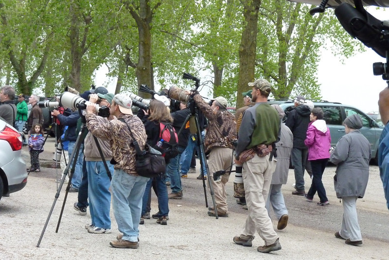 The birding Paparazzi.  Many professional photographers (and passionate amateurs) come to the Biggest Week in American Birding.