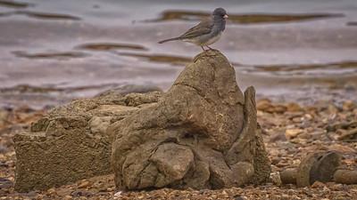 Birds Below Bagnell