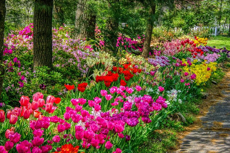 Tulip Lane