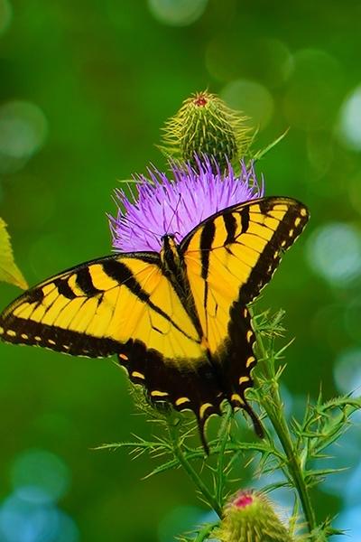Birds, Butterflies and Other Creatures