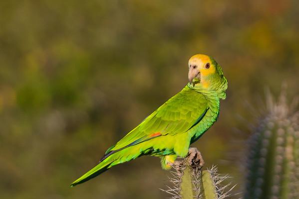 Birds Curacao