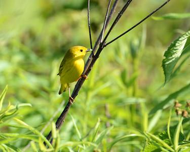 Birds Dawes Arboretum