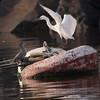 """Go away Little Heron"" said the Egret"