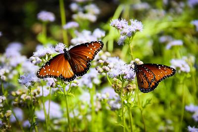 Birds, Flowers and Butterflies