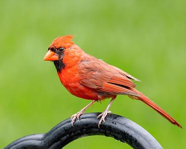 Cardinal 210808-001