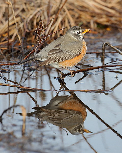 BG-109: Robin Reflection