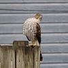 Watch Like a Hawk I