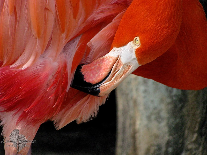 Flamingo; Beauty; Nature,; Florida