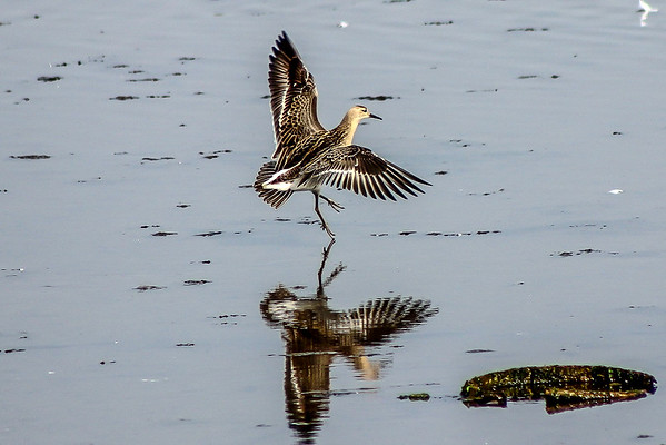 Smooth landing for a Ruff