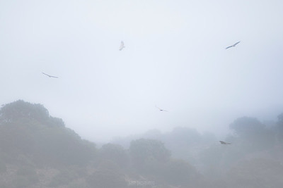 Fog and Vultures