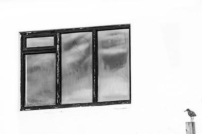 The Tringa and The Window