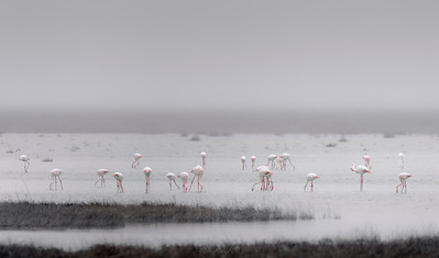 Flamingos in Doñana