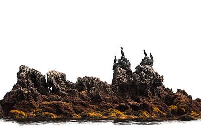 Cormorants - Trengandin