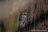 Whitehead (Popokatea)