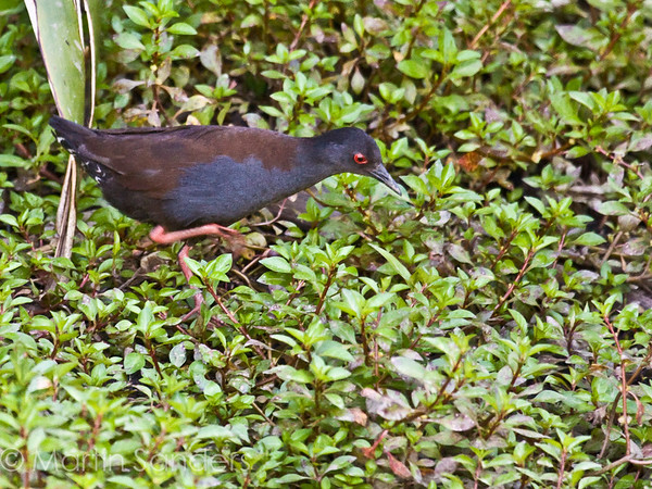 Crakes and Rails