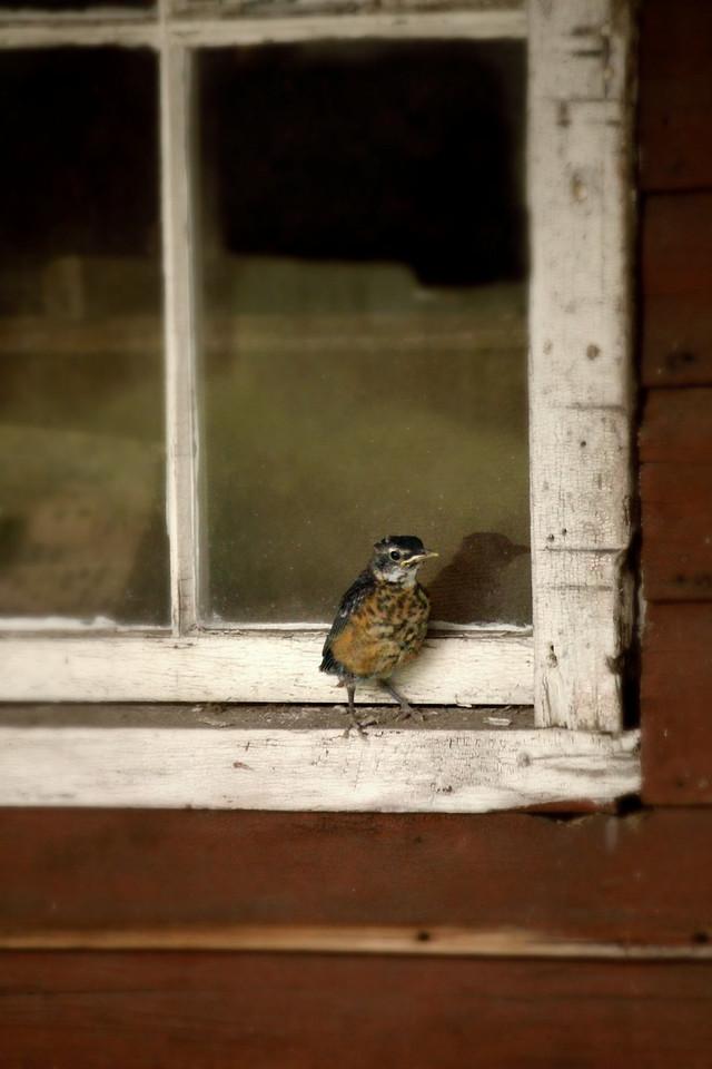 A Little Birdie Told Me So