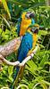 Macaw (2)