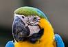 Macaw (8)