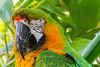 Macaw (5)