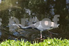 #38 Tricolor Blue Heron