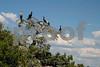 #35 Cormorant