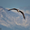 Rocky Mountain Arsenal National Wildlife Refuge, CO