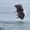 Bald Eagle Ice Fishing