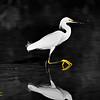 Snow Egret - Lover Key State Park, Fort Myers, FL