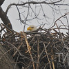 starting the nesting season