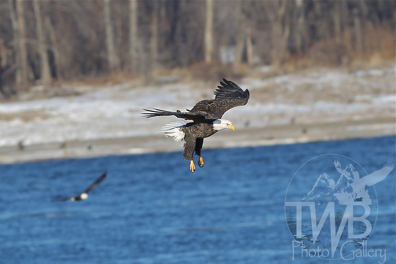 soaring the Mississippi River in Clarksville, Mo.