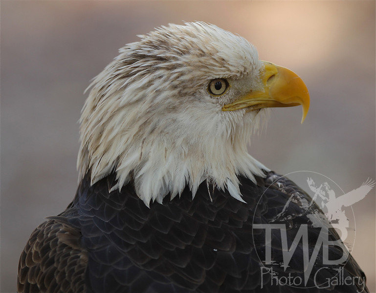 Our Symbol of Freedom