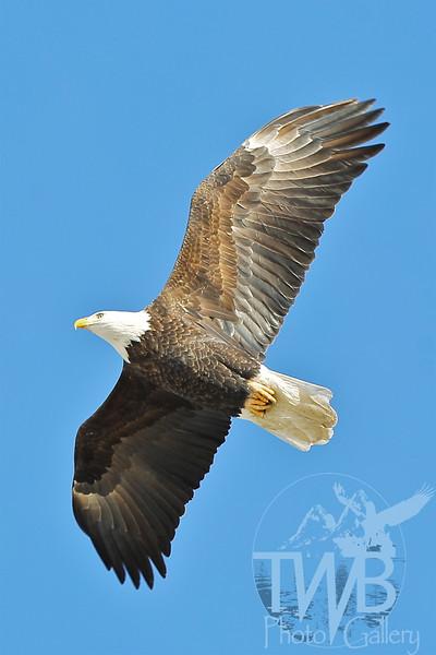 soaring, free