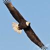 """"""" Eagle Eyes """""""
