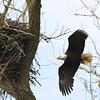 dinner and nest repair