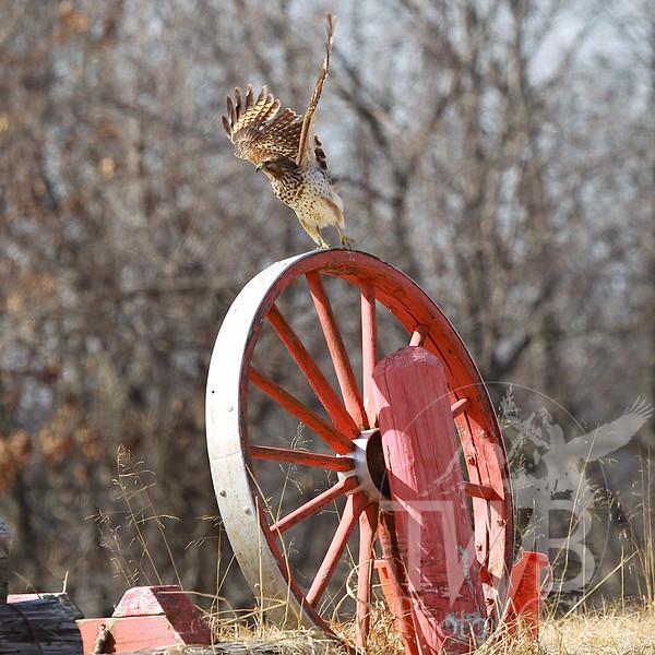 wagon wheel launch