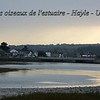 The birs of Hayle Estuary - UK