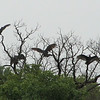 Buzzards are Not Fond of Wet Weather