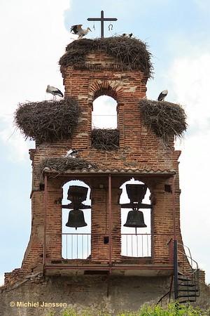 Ciconia ciconia - Ooievaar - White stork - Cigüeña blanca