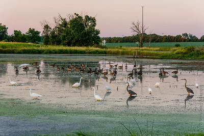 Early Fall Dawn at Swan Corners