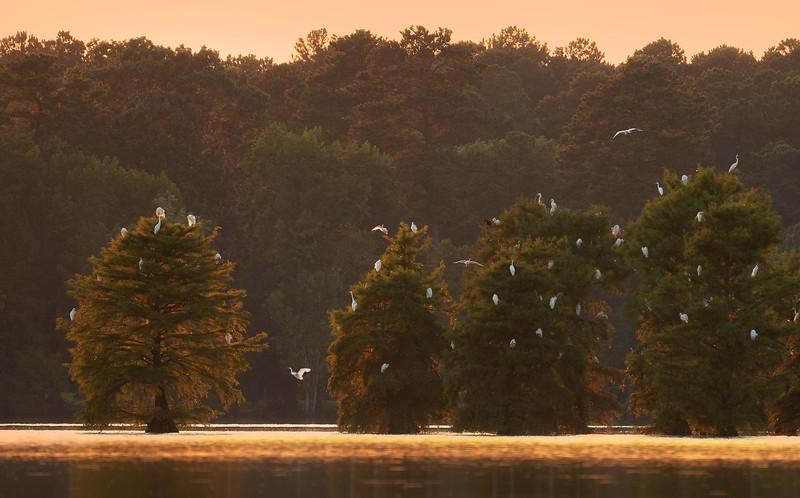Stumpy Lake, Virginia Beach, Virginia