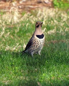 2011 Spring-Summer Birds
