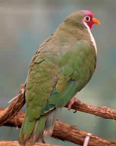 African Aviary Columbus Zoo