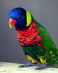 Australian Avriary Columbus Zoo