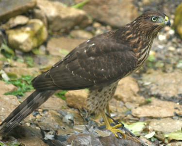 Fall-Winter Birds 2009