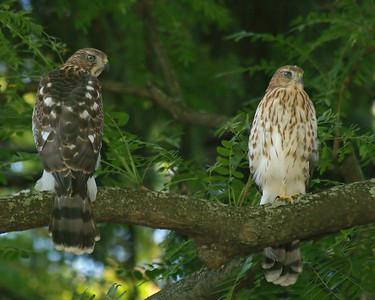 Summer Birds 2006