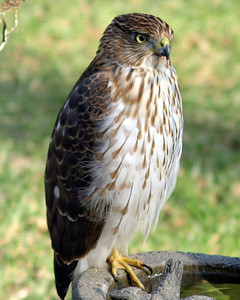 Winter Birds 2009